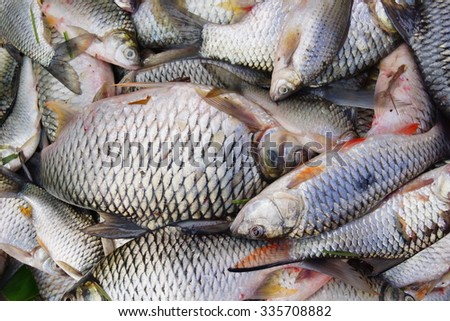 Fish texture background