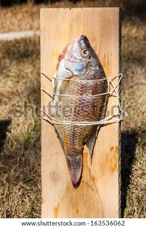 Fish tied  and  cooking on a wooden plank