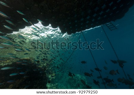 Fish under a floating pier in the Red Sea - stock photo