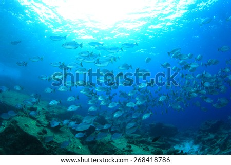 Fish underwater in blue ocean