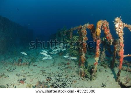 Fish & Wreck - stock photo