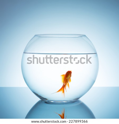 fishbowl with a gold fish - stock photo