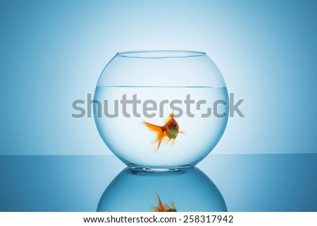 fishbowl with a goldfish that swims in water  - stock photo