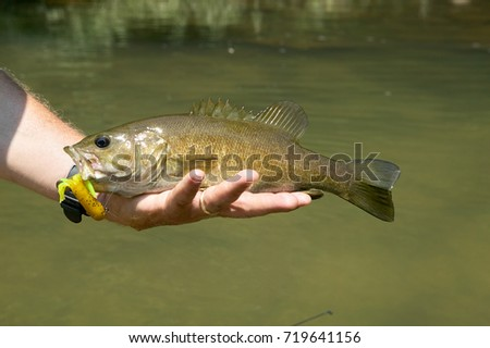 Bass stock images royalty free images vectors for Fishing reel ringtone