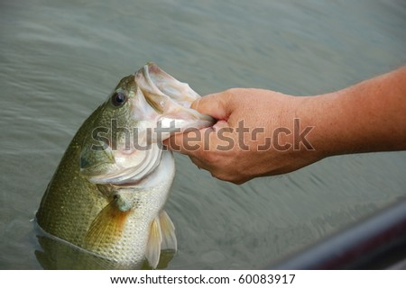 fisherman holding a large mouth bass closeup - stock photo