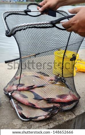 Fisherman with fishing net full of big breams - stock photo