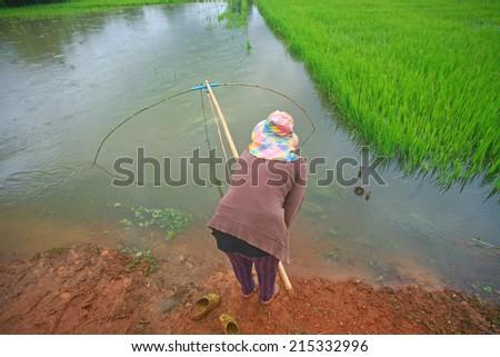 Fishermen fishing in rice field Thailand - stock photo