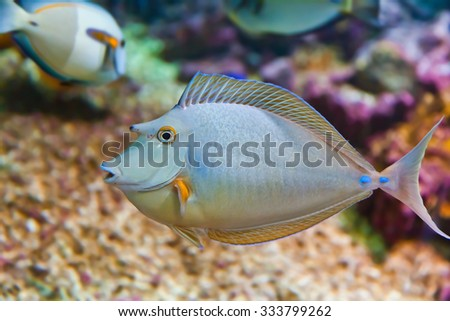 Fishes and corals reef in aquarium - nature background - stock photo