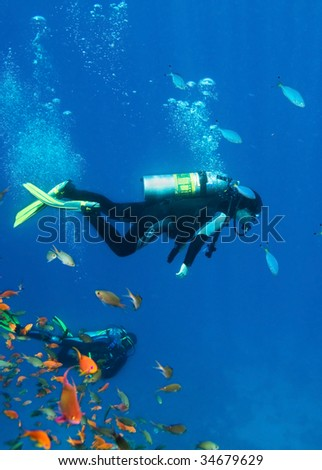Fishes and divers - stock photo