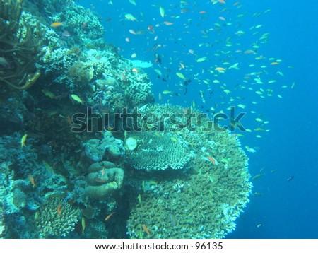 Fishes around a hanging underwater garden - stock photo