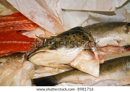 fishes for fishsoup
