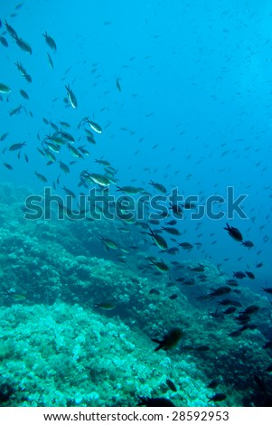 Fishes in a stone riff in the mediterranean sea.