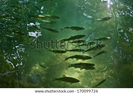 Fishes in blue lagoon - stock photo