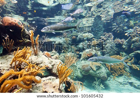 Fishes in Caribbean Sea, Mexico - stock photo