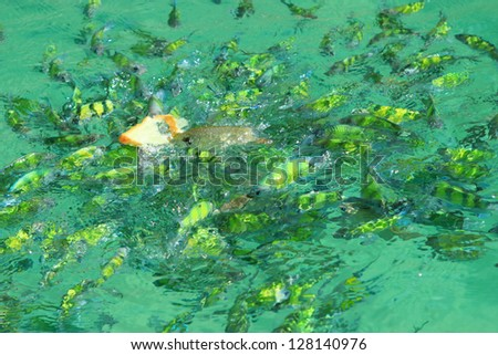 fishes in the sea of thailand, krabi sea - stock photo