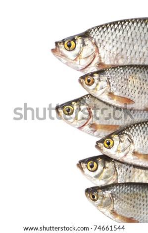 Fishes isolated on white background - stock photo
