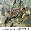 Fishes of the Red Sea. Egypt - stock photo