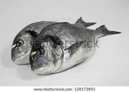 Fishes on withe background - stock photo