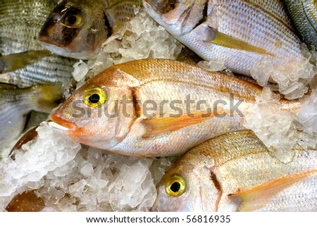 Fishes Over Ice - stock photo