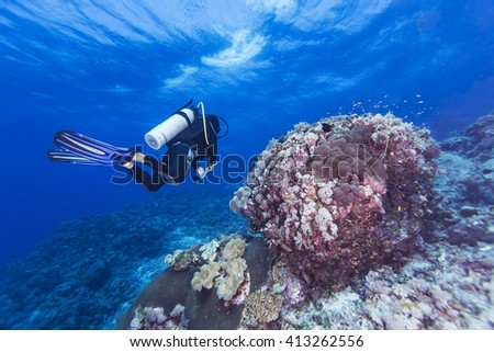Fishes, Scuba divers and coral in tropical reef, Layang Layang - stock photo