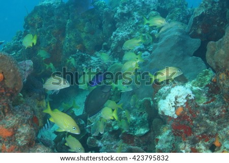 Fishes underwater - stock photo