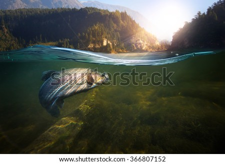 Fishing. Close-up shut of a fish hook under water  - stock photo
