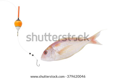 Fishing concept, fish hook and float with seabream fish isolated on white - stock photo