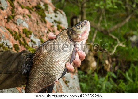 fishing,fish bream in the hand of angler at shore