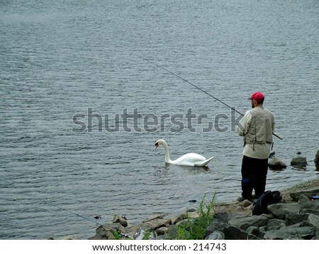 fishing for swans - stock photo