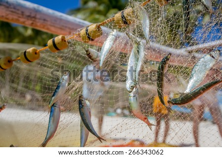 fishing net with fish on natural background - stock photo