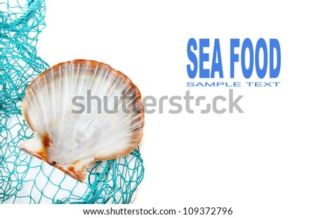 Fishing net with shell and easy removable text. - stock photo