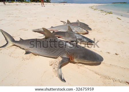 fishing sharks