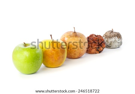 Five apples in a row in various states of decay against white background - stock photo
