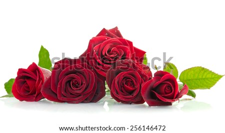 five beautiful red roses lying down on a white background - stock photo
