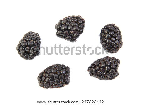 Five blackberries isolated on white background - stock photo