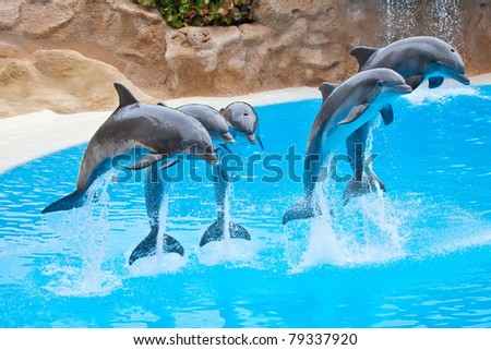 five bottlenose dolphins jumping in blue water - stock photo