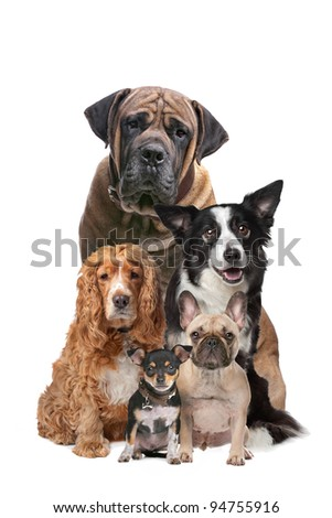 Five dogs in front of a white background - stock photo