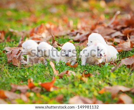 Five dogs playing in the park  - stock photo