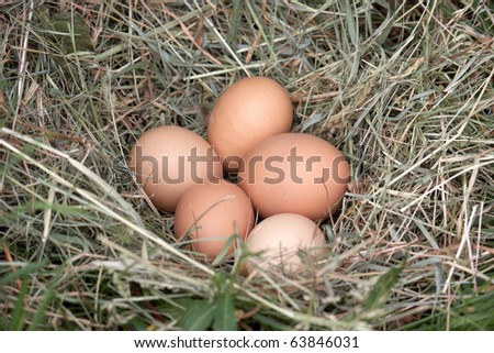 Five Free Range Eggs in a Nest Sitting on the Grass - stock photo