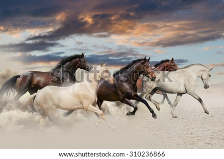 Five horse run gallop in desert at sunset - stock photo