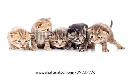 five kittens brood isolated - stock photo