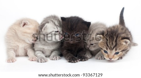 Five kittens on a white background