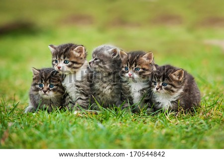 Five little kittens sitting on the law - stock photo