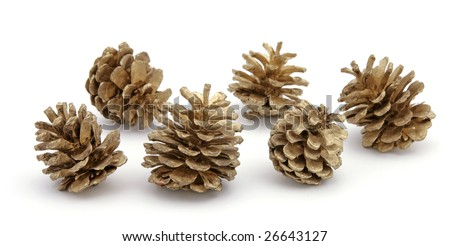 Five pine cones on the white background