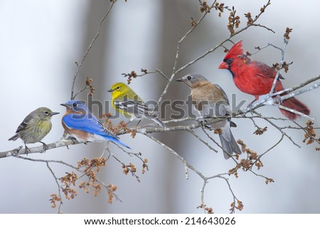 Five Songbirds in Early Spring - stock photo