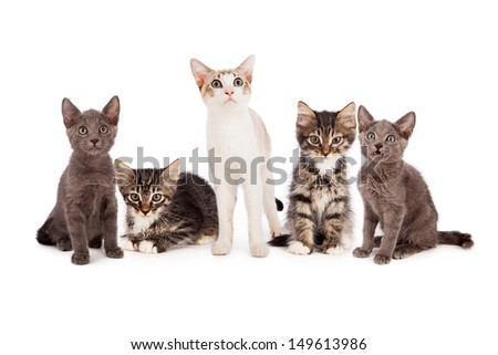 Five young little kittens standing together against a white background and looking at the camera.