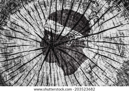flag of  Corsica on cracked wooden texture - stock photo