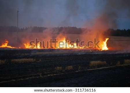 flame burns dry field fire