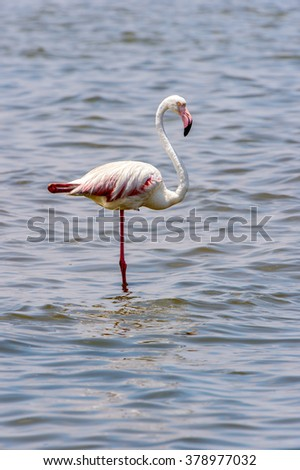 Flamingo in the ocean