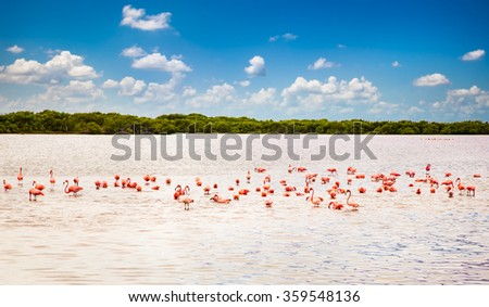 Flamingos at a lagoon Rio Lagartos, which is part of a natural reserve in Yucatan, Mexico - stock photo